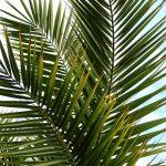 Palm Sunday/Youth Sunday